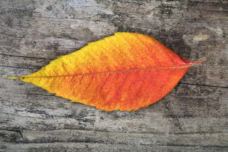 Thanksgiving Week Reflections From A Central California Business Owner
